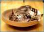 瓦通紙貓抓板