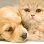 寵物保健/補充品